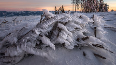 Vereister Baumstamm (Andreas Neuburger) Tags: schnee sunrise austria sterreich graz kalt eis sonnenaufgang baum steiermark styria schckel grazerbergland nikon1424mmf28 nikond800
