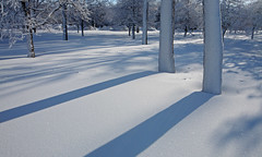 Niagara Falls: Twin trees (Shahid Durrani) Tags: winter snow niagara falls {vision}:{outdoor}=0926 {vision}:{sky}=099 {vision}:{mountain}=0815 {vision}:{snow}=0805 {vision}:{clouds}=083