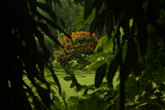 Tree (4257) (Jorge Belim) Tags: flora árvore 70200 canoneos50d