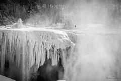 Soaring At Fall's Edge (KWPashuk) Tags: winter mist ontario bird ice water niagarafalls waterfall nikon seagull d200 icicles nikkor70300mm vision:mountain=0572 vision:text=0647 vision:sky=0761 kwpashuk kevinpashuk