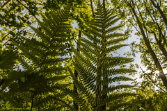 Forest Life (Glyn Owen Photography & Image-Art) Tags: uk trees light england sky fern forest star leaf floor cheshire branches upward