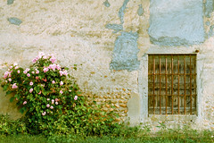 the window (Eric Goncalves) Tags: pink roses france green window grass rose wall fuji pebbles x textures fujifilm ain xseries xt1 ericgoncalves fujifilmx fujifilmxt1