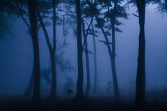 Symmetry silhouettes in the night mist (SimonLea2012) Tags: blue black blackandblue colour eerie atmospheric atmosphere alone silence fog woodland woods dance trees silhouettes light night