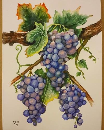 My lovely #grapes ) Done.▪ Мой #виноград наконец-то готов;) Мне нравится результат, но муж уверен, что я сделала тени слишком темными и резкими. Это правда?.. #🍇#instadetails  #process_of_creativity #акварельное #синий#grape  #green #violet#гроздь#