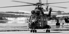 ALAT SA-330B Puma (Rami Khanna-Prade) Tags: avporn aerophotography avgeek aviation plane planeporn flight fly planespotting planespotter aviationlovers tls toulouseblagnacairport aeroporttoulouseblagnac lfbo airport aeroport toulouse blagnac helicopters alat airbushelicopters sa330bpuma eurocopter picoftheday heliporn rotorhead heli chopper rotorcraft helo