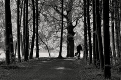 Round the bend (Mr.White@66) Tags: blackwhitepassionaward fujifilm fujifilmxt2 bw blackandwhite monochrome cyclist shadows light sunshine path woods trees biancoenero