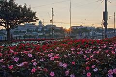 IMG_6552 (maro310) Tags: budapest hungary urban city autumn canon 70d 365project sightseeing varosnezes outdoor sunset sundown naplemente belvaros flower virag colours budacastle unesco plant flowerbed viragagyas