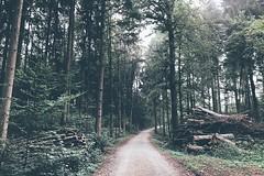 Again (FlavioSarescia) Tags: vsco forest nature landscape sun autumn green iphone walk hike switzerland trees
