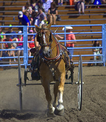 Precision Riding Event (swong95765) Tags: horse buggy carriage competition animal performance