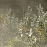 Cobwebs & Mist
