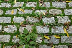 Empedrado (Franco DAlbao) Tags: francodalbao dalbao lumix camino way empedrado paving adoquines setts otoo autumn piedra stone hojas leaves