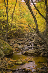 Yellow Stream (VermontScapes) Tags: sterling valley gorge stowe vt vermont river brook stream yellow color fall foliage beautiful moss glow