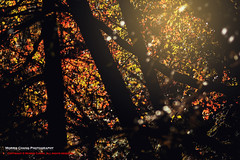 The color of autumn, Taiwan ( (Morris)) Tags:     tw     nikon d7100 taiwan                  cloud sky     108k   108k   ngc