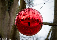 Kew -Winter 2016-2.jpg (Colin Dorey) Tags: kew kewgardens richmond surrey uk london botanicgardens botanic winter 2016 park gardens autumncolours trees christmasatkew christmas christmasdecorations decorations daytime daylight reflaction