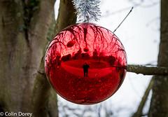 Kew -Winter 2016-2.jpg (Colin Dorey) Tags: kew kewgardens richmond surrey uk london botanicgardens botanic winter 2016 park gardens autumncolours trees christmasatkew christmas christmasdecorations decorations daytime daylight reflaction