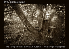 The Turnip Princess (Art's Eye photographic) Tags: arborial trees rural woodlands fairies folklore fairytalesplay imagination leaflitter autumn autumnal ethereal magical mystical fantasy escapism childrensimaginings