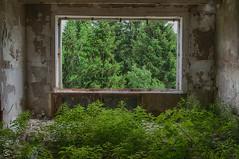 Zimmerpflanzen (sirona27) Tags: pflanzen raum gebude bewuchs ruine ausbreitung samen wachstum