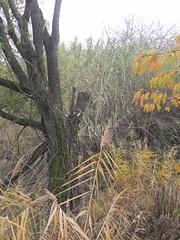 DSCN7421 (Gianluigi Roda / Photographer) Tags: autumn autumncolors tree deciduoustrees foliage