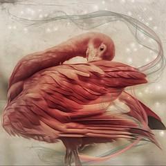.fancy schmancy. (allyson.marie) Tags: nature zoo art animal dream pink bird