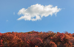 Treetops | Catskills, New York (Stefan Hueneke) Tags: stefan hueneke manhattan new york city state trees treetops fall autumn sky vintage red orange changing seasons colors sunrise cloud catskill catskills mountains mountain paltz canon 2470mm t5i len flare