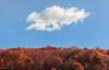Treetops | Catskills, New York (Stefan Hueneke) Tags: stefan hueneke manhattan new york city state trees treetops fall autumn sky vintage red orange changing seasons colors sunrise cloud catskill catskills mountains mountain paltz canon 2470mm t5i len flare