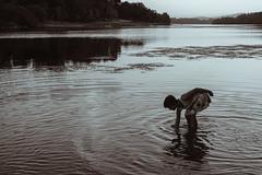 Ro Mio (Tomio) (milenamphoto) Tags: rio mio galicia paisaje agua colores