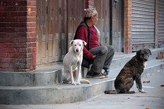dogs & man....... (shingola) Tags: dogs man kathmandu flower seller