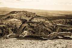 Weathered (keycmndr) Tags: blackandwhite brycecanyonnationalpark film landscape miscellaneoussubjects mountains utah