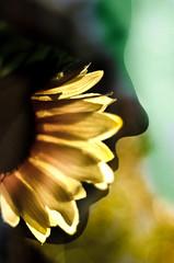 Girasol (MatiMangoFotografia) Tags: doubleexposure flowers people spring faces colors love green yellow
