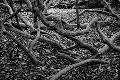 Moorlands (alh1) Tags: yorkshirewildlifetrust naturereserve england northyorkshire york
