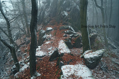 Rocky Path.  In Mysterious Woods (Jenny Rainbow (jenny-rainbow.pixels.com)) Tags: jennyrainbowfineartphotography winter woods mysteriouswoods forest winterscene rocks winterwoodssnowywoods snowyforest winterforest snowyrocks foliage fallfoliage landscape pinetrees winteratmosphere gothic gothicatmosphere monochrome brown white snow stones rural nature winternature foresttreebranches chaos ice scenery fineartlandscape trees wintertrees mysterious calm tranquilityserenity zen mist mistywoods fineartphotography czechrepublic lelekovice babilom pine