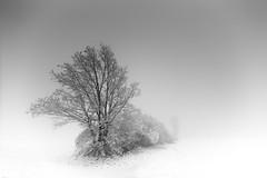 The White Dress of Winter (ArztG.|Photo) Tags: quiet silence snow fog trees love fine art austria atmosphere arztg|photo