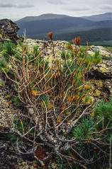 1998 Ural Mountains-5 (Alexander Kondakov) Tags: 1998 kodak kodakektachromee100vs landscape lens perm photobyalexanderkondakov russia ural uralmountains film minolta700si minoltaaf2885mmf3545 minoltaaf75300mmf4556 old