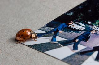 Beetle, Beatles and beetle. [Explored]