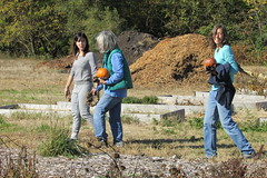 IMG_0939 (hammonton_garden) Tags: 2016 communitygarden fall hammonton southjersey nj gardenstate