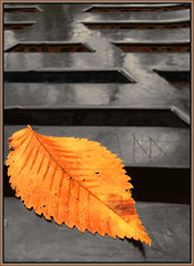 (Cliff Michaels) Tags: iphone iphone6 photoshop pse9 bench leaf park fall msryville tennessee