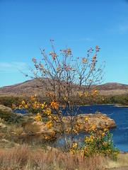 Shades of Blue (jHc__johart) Tags: lake wichitamtnwildliferefuge oklahoma water sky tree leaves rockformations