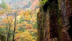 Vertical autumn (coniferconifer) Tags: rock autumn 赤目四十八滝 akame ravine