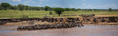Crossing the Mara River (JoCo Knoop) Tags: tanzania serengeti marariver