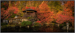 Anderson Japanese Gardens 2016 - 100 (Darek3010) Tags: japanesegardens gardens autunm fall japanese walk pond park red leaves