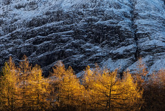 Changing (David Ball Landscape Photography) Tags: glencoe scotland autumn winter trees tree landscape photography outdoors travel adventure canon davidballlandscapephotography 2016 snow mountain weather composition colours landscapes