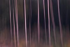 Ups (Mariette van Waard) Tags: nature trees motion blur long exposure
