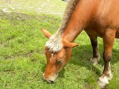 caballo 19 (Laura.BDN) Tags: mountains animals caballos animales animaux animali montaas montagnes montis