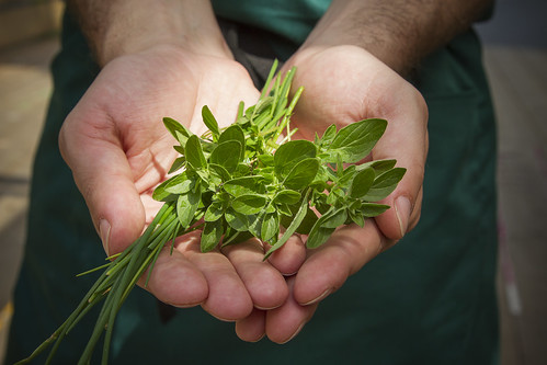 Herb Cuttings From The Royal Opera House Roof Terrace Roh 2013