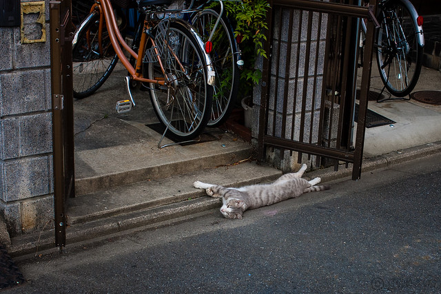 Today's Cat@2013-06-30