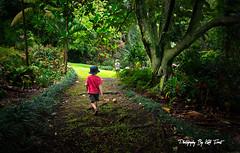 The Secret Garden (Kiall Frost) Tags: trees boy green girl hawaii oahu exploring jungle secretgarden redshirt bluehat kiallfrost