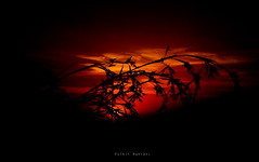 leaf sunset (Pulkit Nakrani) Tags: sunset sun india beautiful sunrise canon leaf creative gujarat sillhoute icapture bhavnagar sx230hs sx220hs