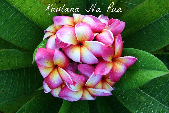 Kaulana Nâ Pua (Famous Are The Flowers) - Ellen Keho`ohiwaokalani Wright Prendergast