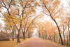 autumn (chungshane) Tags: autumn tree harbin northeastchina