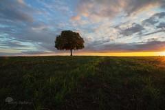Sous les sunlight (photosenvrac) Tags: photo lumière culture ciel nuage arbre champ beauce marronnier thierryduchamp
